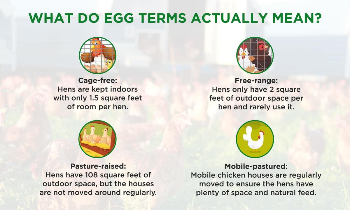 What-do-egg-terms-actually-mean