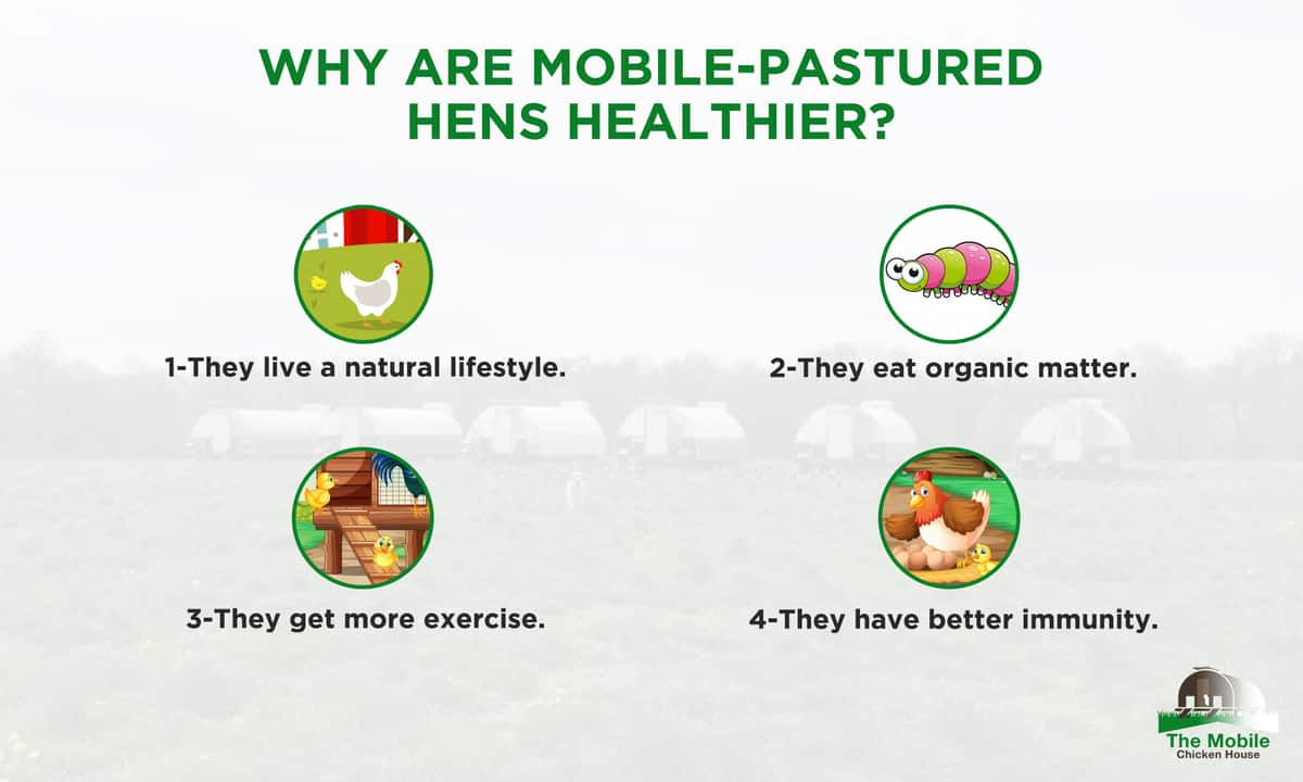 Why-are-mobile-pastured-hens-healthier