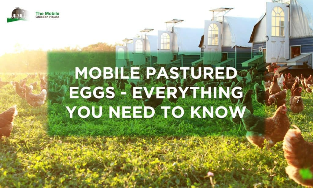 Mobile Pastured Eggs: <br> Everything You Need To Know 3