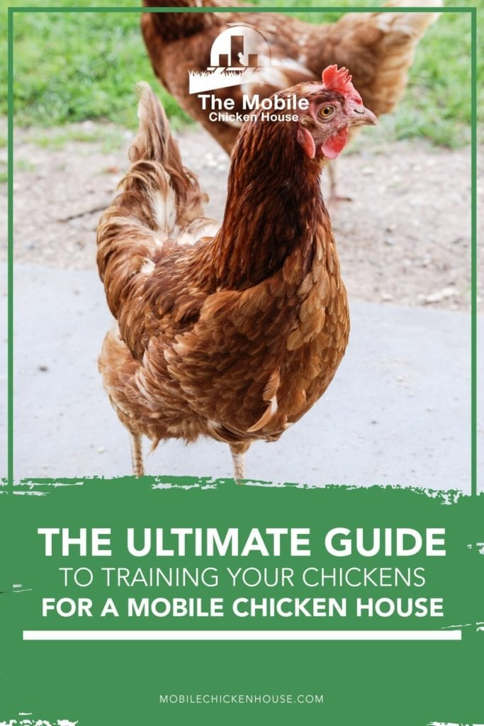 The Ultimate Guide to Training Your Chickens for a Mobile Chicken House 2