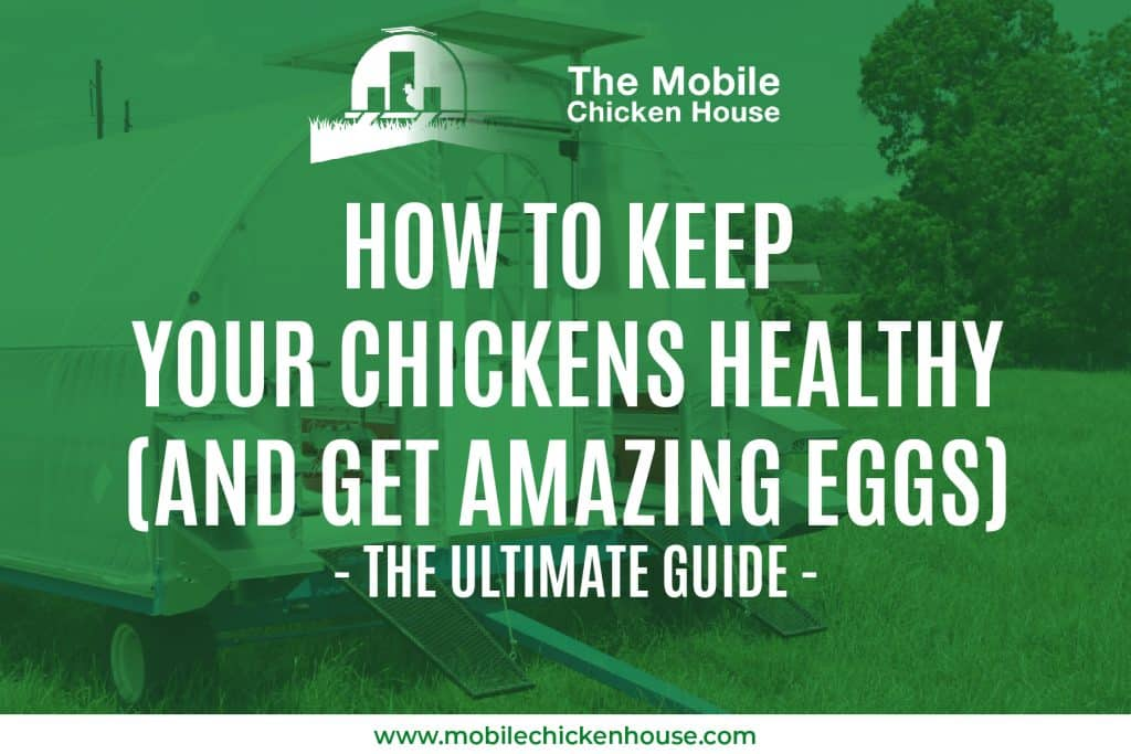 How To Keep Your Chickens Healthy (and get amazing eggs) - The Ultimate Guide 1