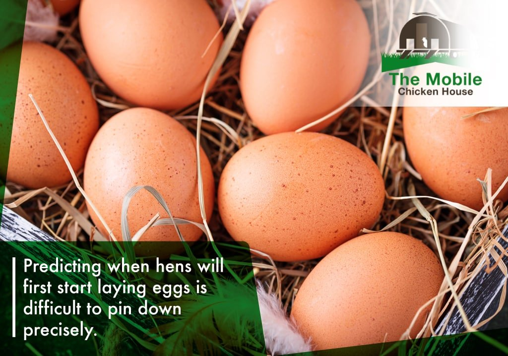 Predicting when hens will lay is difficult